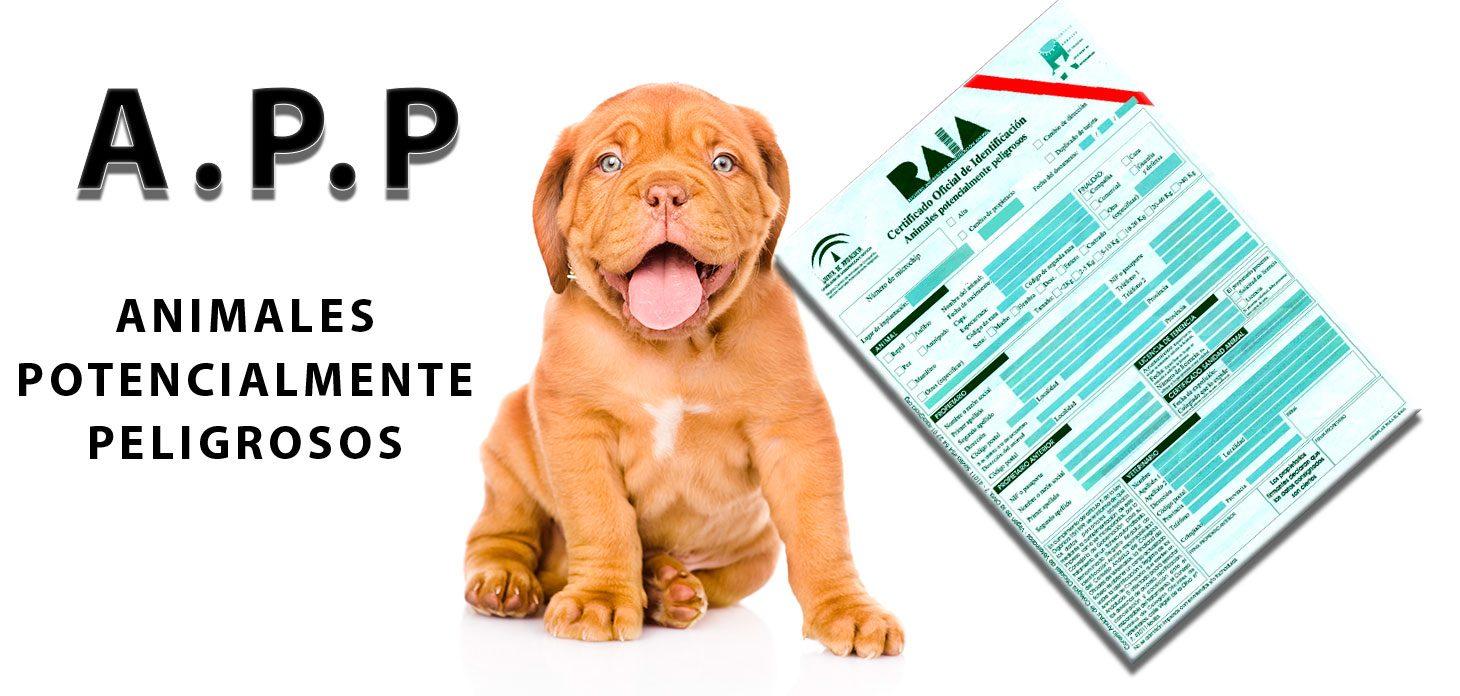 microchip perro potencialmente peligroso